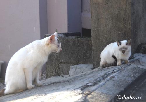 ビビリ顔の子猫