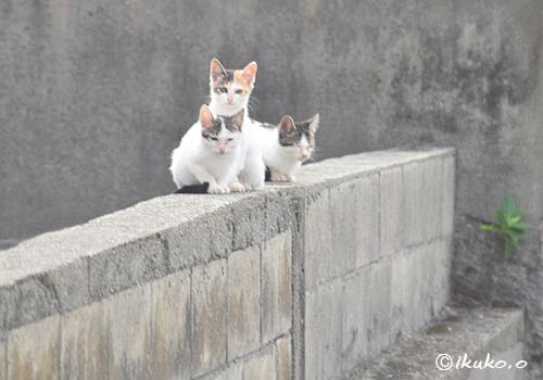 塀の上の子猫達
