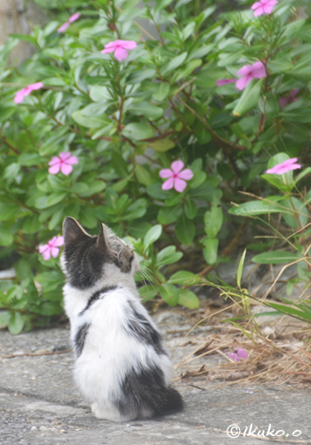 花にみとれる子猫