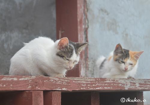 島猫の兄弟