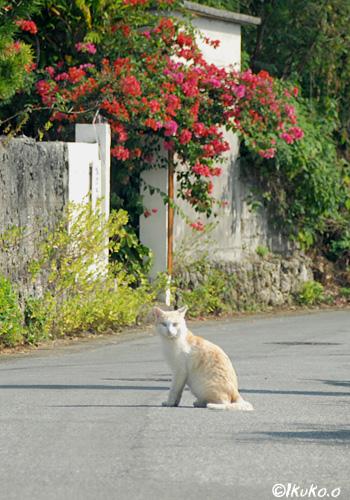 猫のいる風景