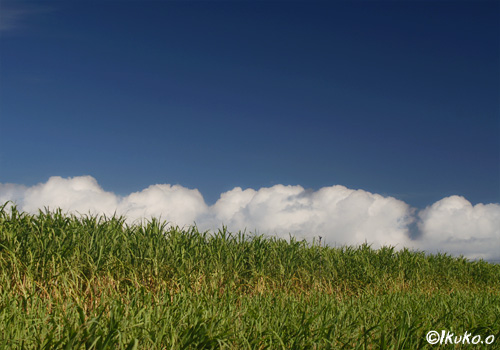 空とさとうきび畑