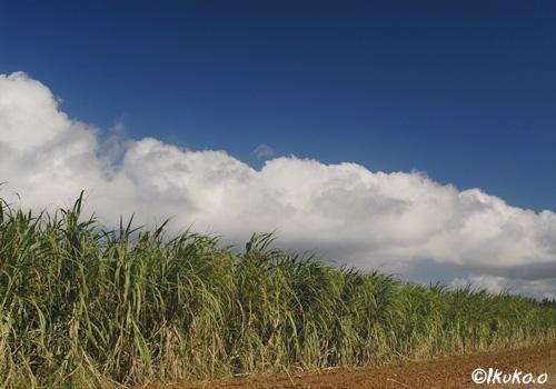雲と空とさとうきび