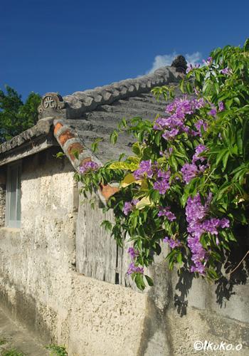 花の咲く民家