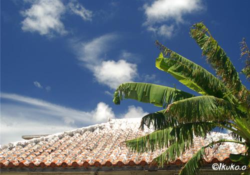 芭蕉と赤瓦屋根の民家