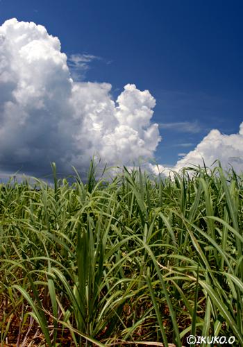 畑の上にのびる雲