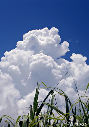 高く湧き上がる入道雲