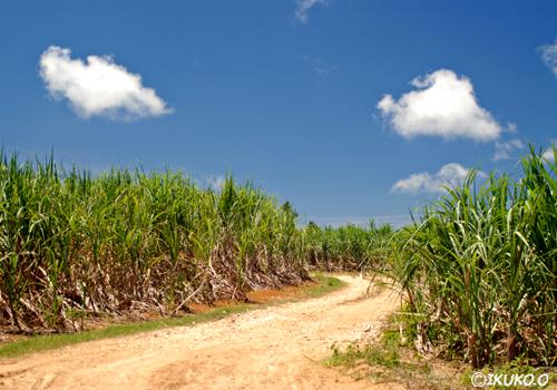 畑の中をのびる道