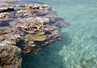 タイドプールとサンゴ礁