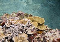 海上に現れたサンゴ礁