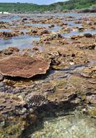海上のテーブルサンゴ
