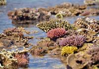 海上の花々