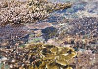 海上を埋め尽くすサンゴ