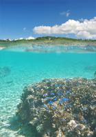 白鳥湾のサンゴ礁