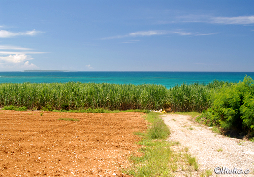 さとうきび畑と青い海