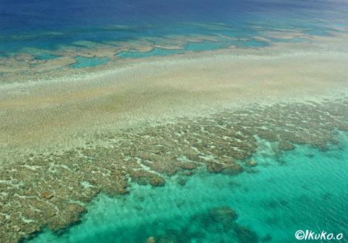 フナウサギバナタの珊瑚礁