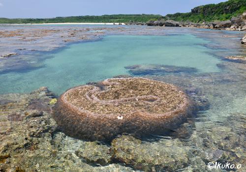 サンゴ礁のタイドプール