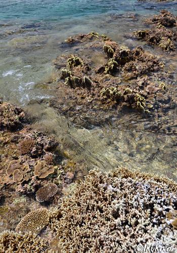 サンゴ礁の間を流れる川