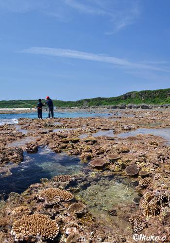 ビシ(干瀬)のサンゴ礁