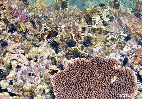 海上と海中のサンゴ