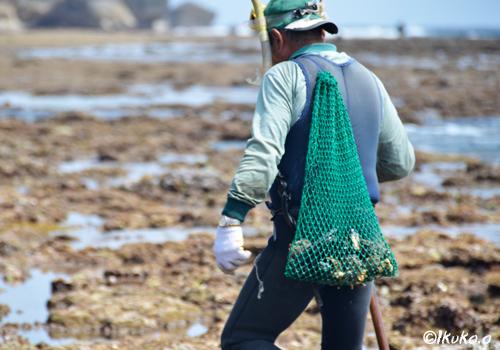 収穫した貝