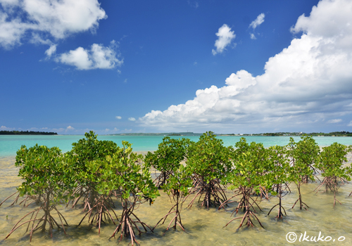 マングローブと青い海