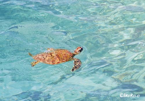 ウミガメが暮らす海