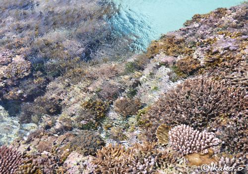 海上の珊瑚礁