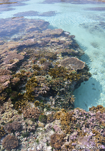 海上の珊瑚礁と青い海