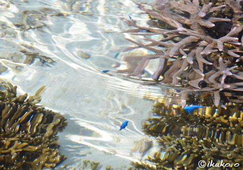 波間に揺らめく青い影