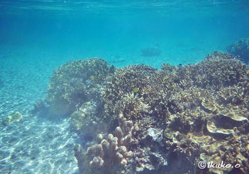 サンゴと海底に揺れる波紋