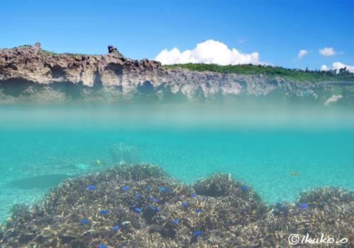白鳥湾のサンゴと夏空