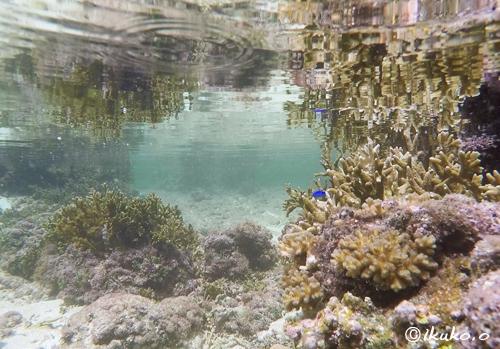幻想的な水中風景