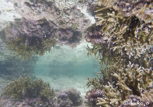 サンゴと水面の鏡像