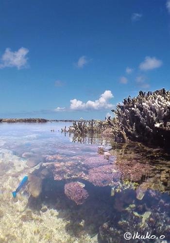 タイドプールのサンゴ