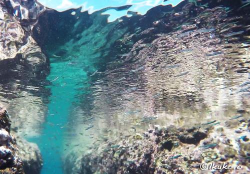 水面近くの小魚の群れ