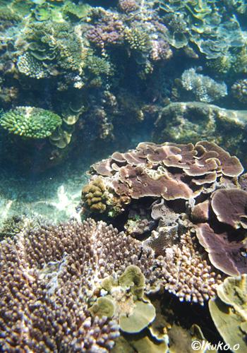 サンゴに降り注ぐ光