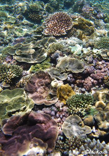 珊瑚の花畑