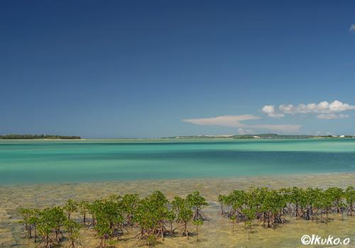 マングローブと与那覇湾