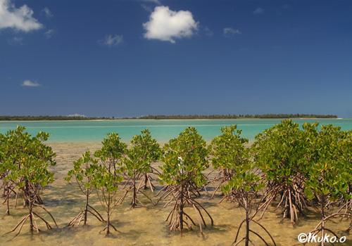 海とマングローブ