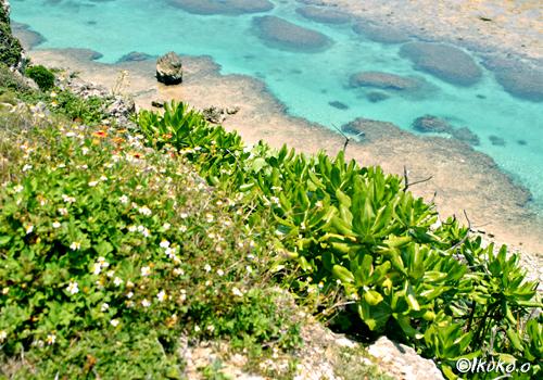 断崖の下の海
