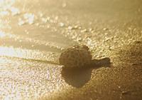 金色に輝く砂浜
