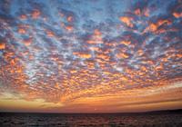 赤く染まるうろこ雲