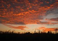 うろこ雲と夕陽