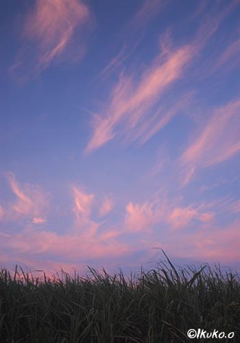 空に舞うピンクの炎