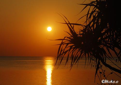 アダンと夕陽