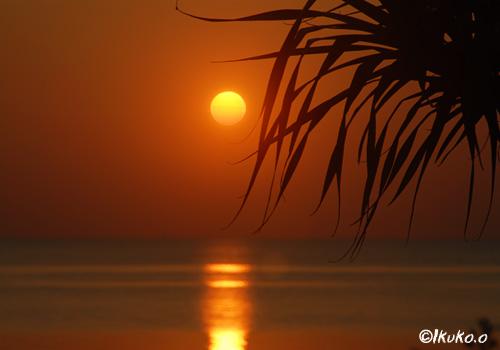 アダンとオレンジの太陽