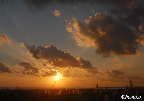 夕焼け空とさとうきび畑