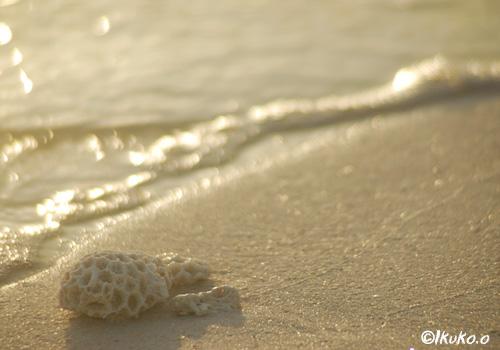 波打ち際のサンゴ