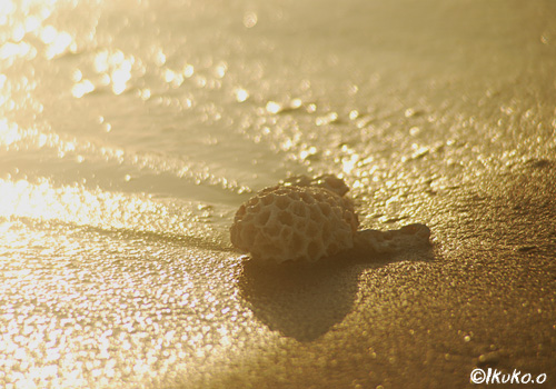 金色に光る砂